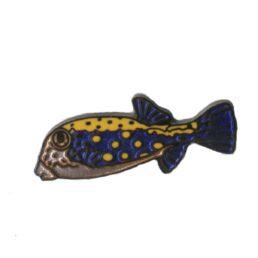 Poisson bleu tâché orange-0
