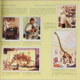 Album d'images Animaux préhistoriques-413750